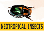 Neotropical Insects